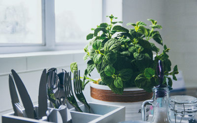 Top 9 Indoor Plants: Purify The Air With Minimum Maintenance